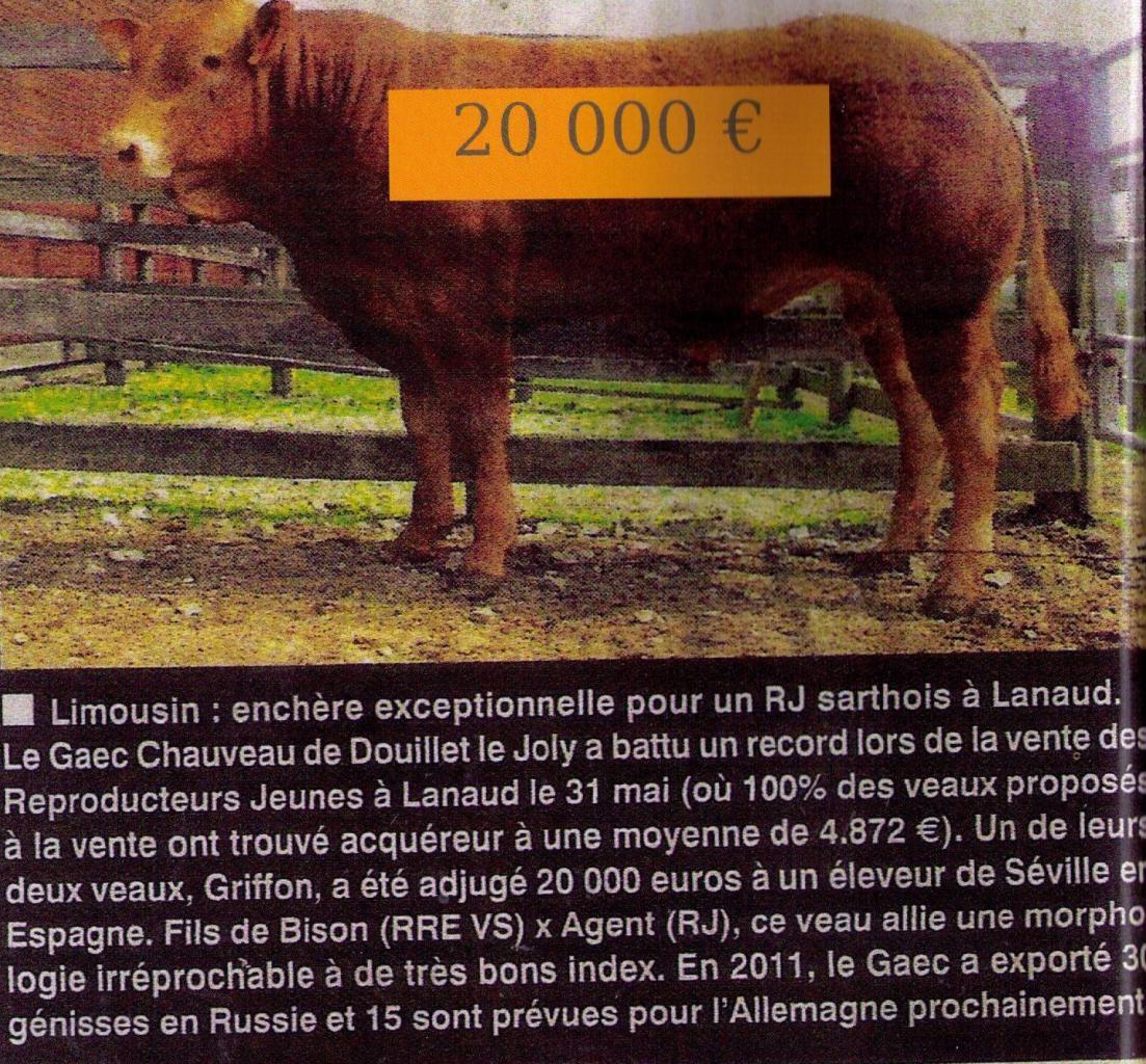 Griffon en Espagne (Jurado Perez)
