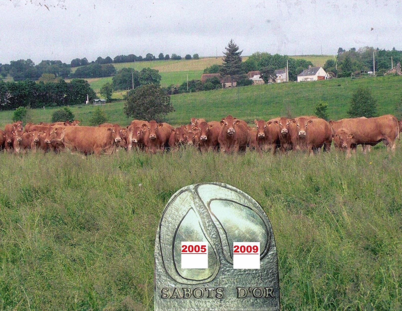 Bienvenue sur le site  famille Chauveau éleveur selectionneur Limousin à Douillet le Joly  en Sarthe